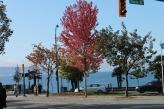 Autumn 2013 079