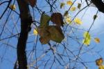 Autumn 2013 123