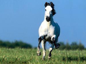 Horse-Wallpaper-horses-4486243-1600-1200