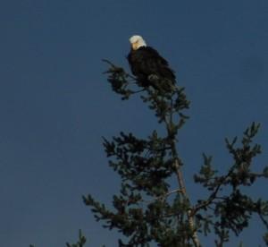 Eagle Festival 145