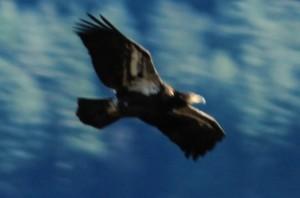 Eagle Festival 366