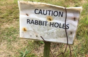Caution-Rabbit-Holes-600x390-600x390